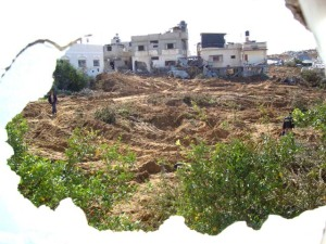 samir-abed-rabbo27